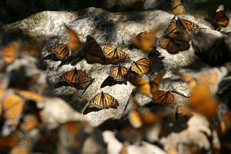 Soubor Route66 For Rocks Jpg Wikipedie Soubor Monarchs Resting On Rocks Jpg Wikipedie
