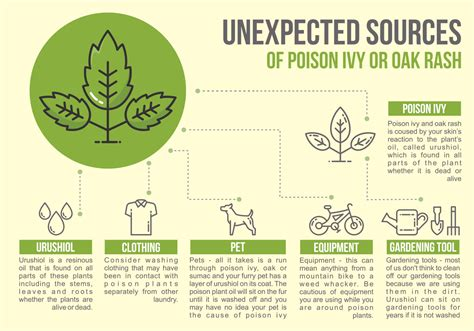 Poison Ivy Infographic Download Free Vector Art Stock
