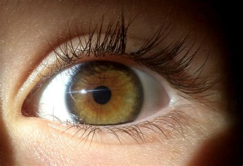 central heterochromia  heterochromia pinterest colors eyes   ojays