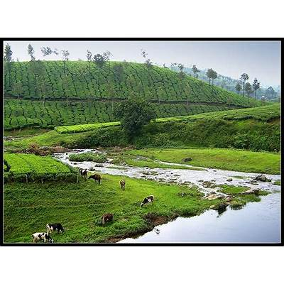 `Valparai' They were very happy... a photo from Tamil