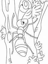 Coloring Pages Ant Printable Anthill Template Paul Coloringme sketch template