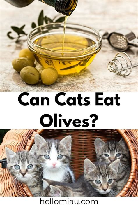 can cats have kalamata olives