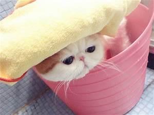 Catsparella: Meet Snoopy: The Internet's New Favorite Cat ...