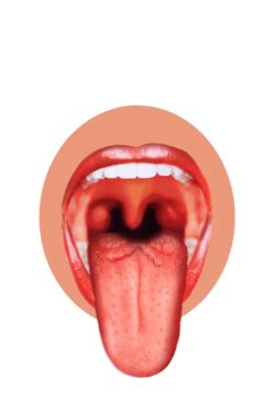sensory systemsgustatory system wikibooks open books