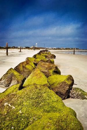 Jetty The North Tybee Islan Picture