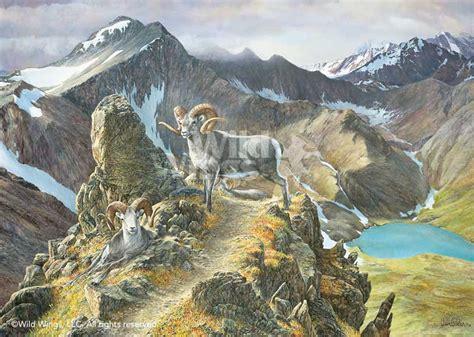 pinnacle bighorn ram limited edition print wild wings