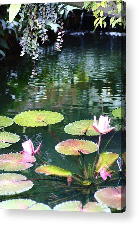 tropical reflections acrylic print  rumyana whitcher