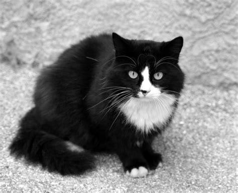 canaper noir et blanc noir et blanc by saultrider on deviantart