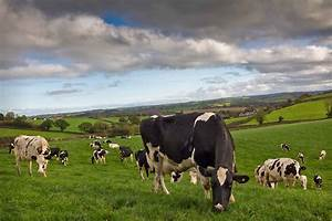 'Dairy expansion won't all be about greenfield sites and ...