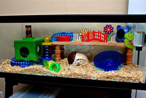 aquarium cages for hamsters hamster home setups random pics hamster central