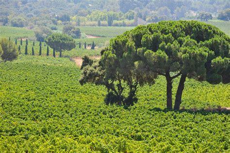 chambres d hotes porquerolles domaine viticole du var vignoble à la londe château