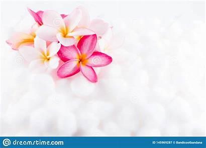 Plumeria Mild Texture Colorful Flower