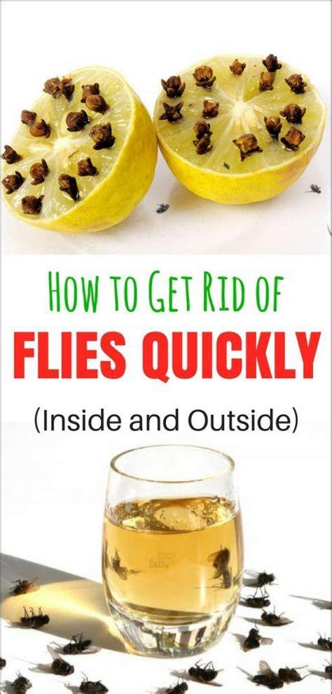 best 25 get rid of flies ideas on repel flies
