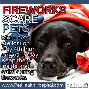 Fireworks Scare Pets - Take some simple precautions to ...