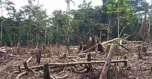 "Reversing the ""Tragedy of the Commons"" in the Amazon ..."