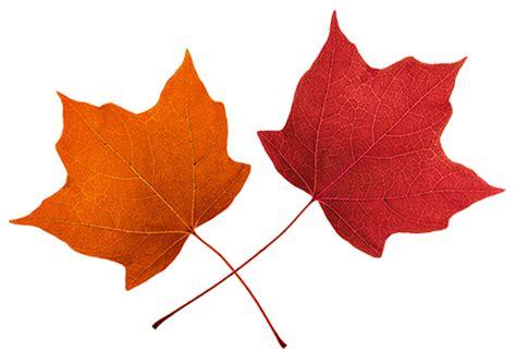 maple leaf clip art clipartioncom