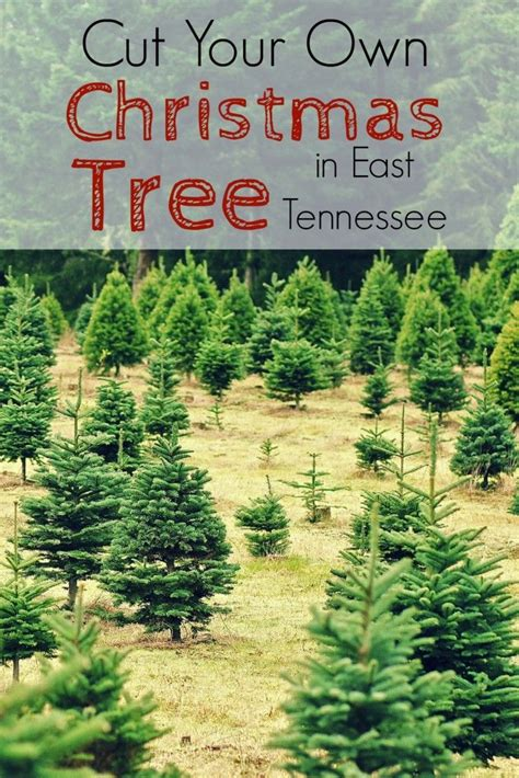 cut your own xmas trees maryland 10 images about explores the smokies on cooking activities motor and