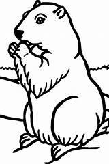 Groundhog Coloring Murmeltier Printable Drawing Malvorlagen Sheets Preschool Realistische Hog Ground Crafts Template Colorare Marmotta Realistic Animal Birthday Adult Ausmalbilder sketch template