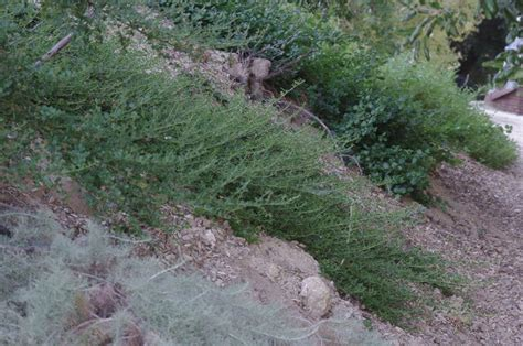 what to plant on a hillside to erosion how to landscape a hillside slope to stabilize and control erosion
