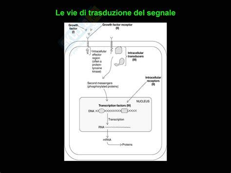 dispense di biologia oncologia clinica biologia dei tumori dispense