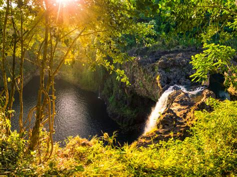 hawaii forest trail hilo tropical waterfalls hawaii discount