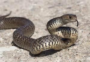 Schlangen in Australien: Giftigste Arten & wichtige Infos