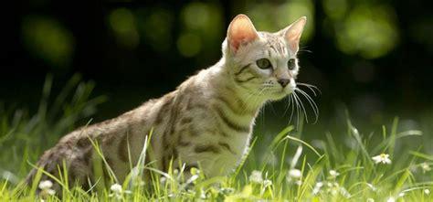 katzen tipps zum schutz vor parasiten