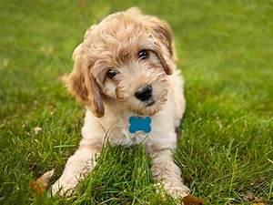Bodenbelag Für Hunde Geeignet : hunde f r allergiker diese hunderassen eignen sich ~ Lizthompson.info Haus und Dekorationen
