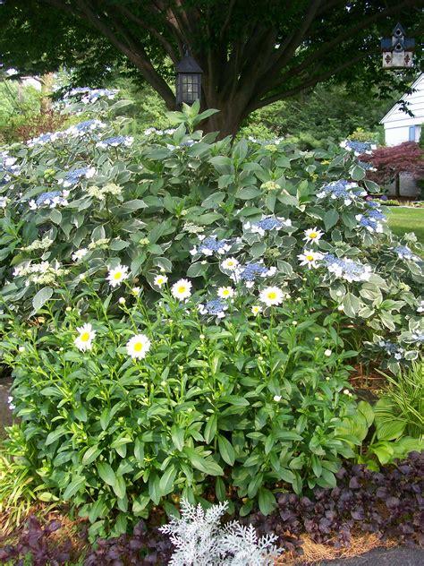 shade loving  fairfield home garden