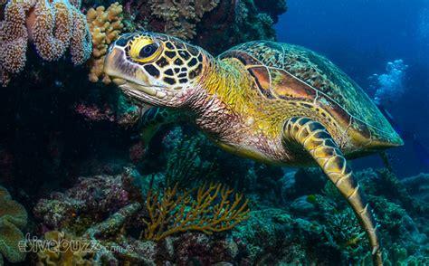 sea turtles   solitary islands  living coast