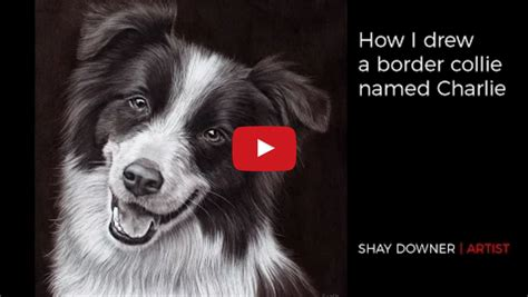 Shay Downer Shows You How To Draw A Border Collie Border