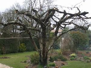 Taille De Cerisier : tailler un vieux cerisier id es d coration id es ~ Melissatoandfro.com Idées de Décoration