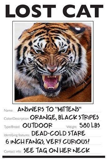 lost cat photo poster funny tiger wild animal kid friendly