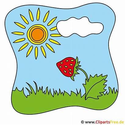 Clipart Sommer Erdbeere Cliparts Kostenlos Sonnen Clipartsfree