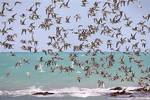 Migratory birds don't train for migrations | Earth | EarthSky