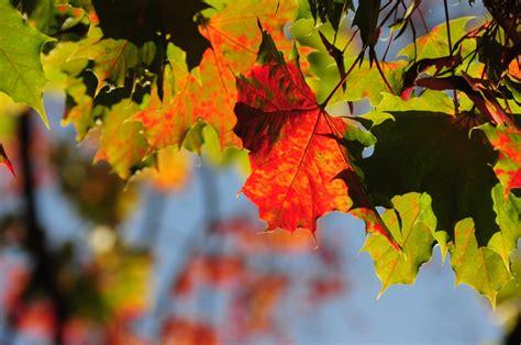 Oktobris bijis siltākais kopš 2008.gada | liepajniekiem.lv
