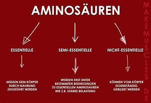 Grundumsatz Berechnen Bodybuilding : aminos uren was wozu welche wo ~ Themetempest.com Abrechnung