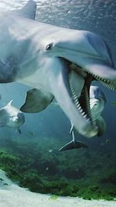 Dolphin Underwater Galaxy S3 Wallpaper (720x1280)