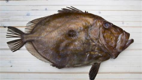 cuisiner le poisson recette pour cuisiner le conseils de