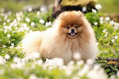 Desktop Summer Dog Puppy Wallpapers Flowers Wallpapersafari