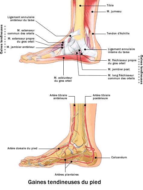 douleur exterieur du pied droit douleur pied exterieur droit 28 images masermin dolencias douleur 224 la cheville apr 232 s
