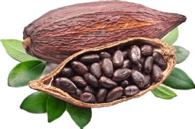 Pikbest has 200 raw coffee bean design images templates for free. Cocoa Beans Grown Around The World Png Image With Transparent Background