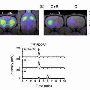 (PDF) Use of [18F]FDOPA-PET for in vivo evaluation of ...