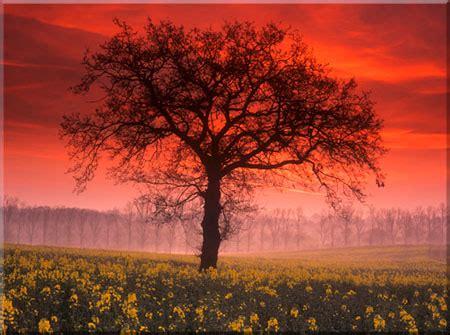 landscape photography photographyzone