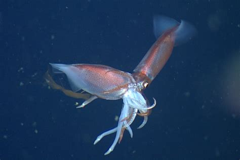 species  squid eat   kind plants