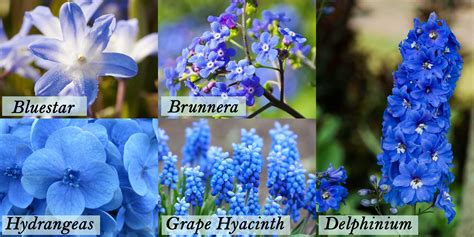 types of blue flowers popular types of blue flowers blooms today