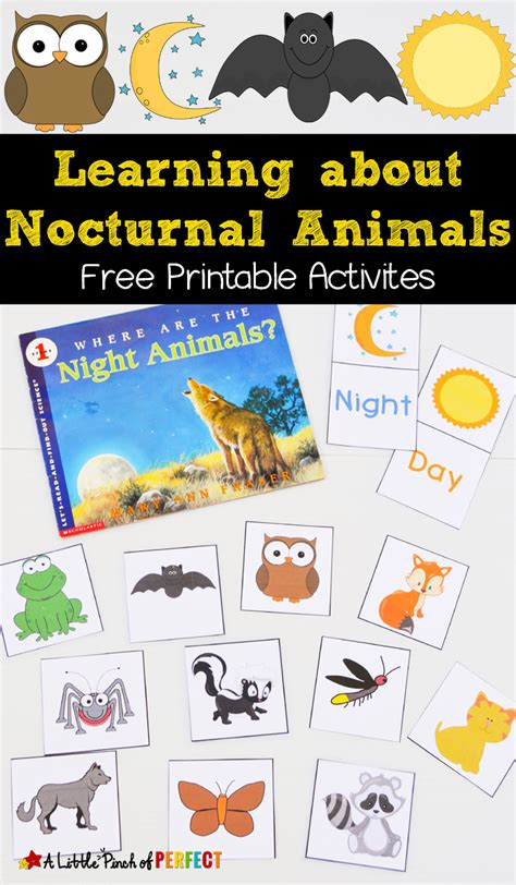 free nocturnal animals printables animal crafts and