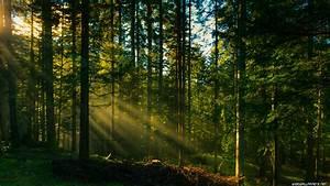 Forest desktop wallpapers 4K Ultra HD