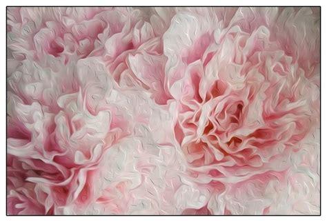 pink peonies wallpaper wallpapersafari
