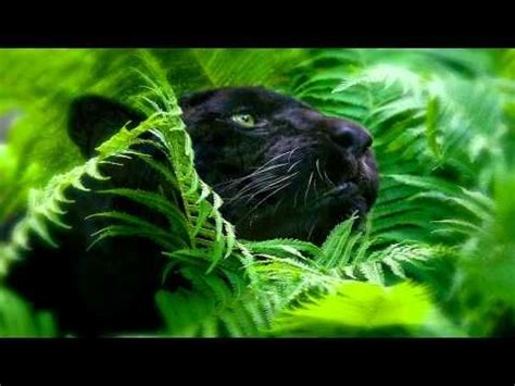 rainforest sounds and animals 1 hour soothing audio for